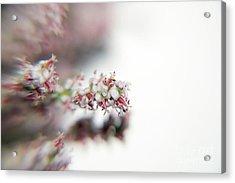 Spring Flower Acrylic Print