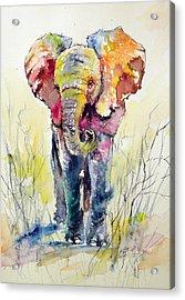Elephant Acrylic Print by Kovacs Anna Brigitta