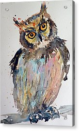 Owl Acrylic Print by Kovacs Anna Brigitta
