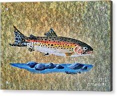 Rainbow Trout Acrylic Print