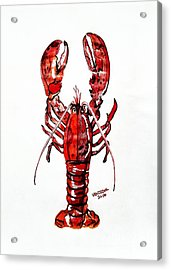 Red Lobster Acrylic Print by Scott D Van Osdol