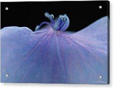 Hydrangea Petal Acrylic Print