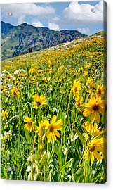 Wasatch Mountains Utah Acrylic Print