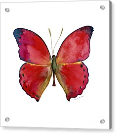 83 Red Glider Butterfly Acrylic Print by Amy Kirkpatrick