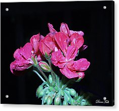 Flower Acrylic Print by Diane Falk