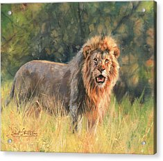 Acrylic Print featuring the painting Lion by David Stribbling