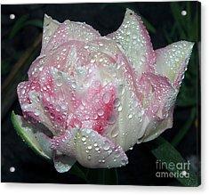 Nice Tulip Acrylic Print by Elvira Ladocki