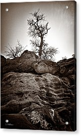 A Barren Perch - Sepia Acrylic Print by Christopher Holmes