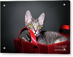 A Basket Full Of Surprises Acrylic Print