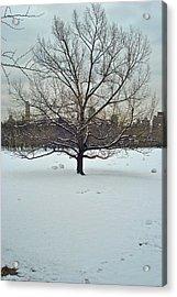 A Beautiful Tree Acrylic Print