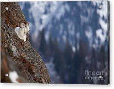 A Bed For One Acrylic Print by Tim Grams