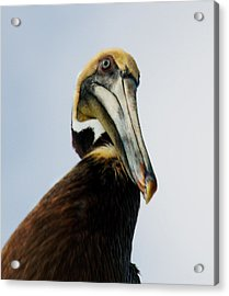 Acrylic Print featuring the photograph A Bird's Eye View by Kathleen Stephens