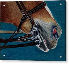 A Bit Of Control - Horse Bridle Painting Acrylic Print