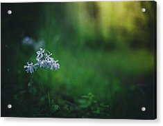 Acrylic Print featuring the photograph A Bit Of Forest Magic by Shane Holsclaw