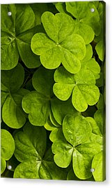 A Bit Of Green Acrylic Print by Carrie Cranwill