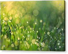 A Bit Of Green Acrylic Print