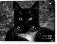 A Black Cat's Life -florida Acrylic Print