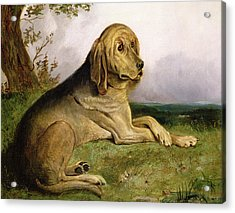 A Bloodhound In A Landscape Acrylic Print