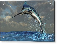 A Blue Marlin Flashes Its Iridescent Acrylic Print by Corey Ford