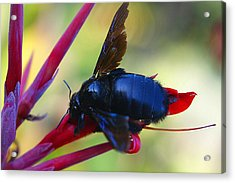 Acrylic Print featuring the photograph A Bluebee by DiDi Higginbotham