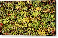 A Botanical Mosaic Acrylic Print