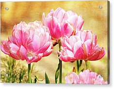 A Bouquet Of Tulips Acrylic Print