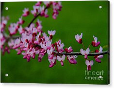 A Branch Of Spring Acrylic Print