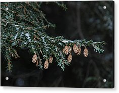 A Branch's Treasure Acrylic Print by See Me Beautiful Photography