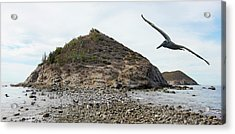 A Brown Pelican Does A Flyby Of A Cactus Covered Desert Island  Acrylic Print
