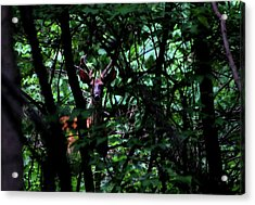 Acrylic Print featuring the photograph A Buck Peers From The Woods by Bruce Patrick Smith
