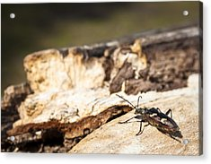 Acrylic Print featuring the photograph A Bugs Life by Stewart Scott
