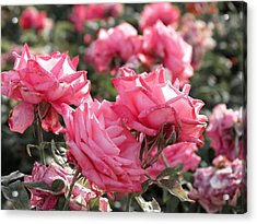 A Bunch Of Pink Acrylic Print by Laurel Powell