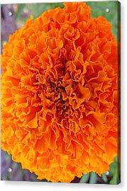 A Burst Of Orange Acrylic Print