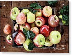 Acrylic Print featuring the photograph A Bushel Of Apples  by Stephanie Frey