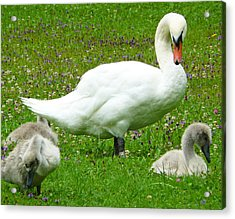 A Caring Mother Acrylic Print by Daniel Csoka