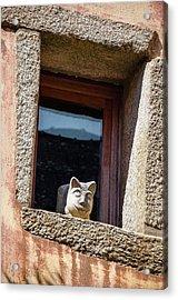 A Cat On Hot Bricks Acrylic Print