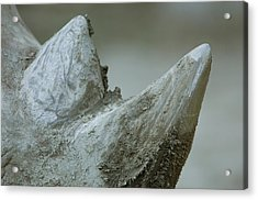 A Close-up View Of A White Rhinos Muddy Acrylic Print