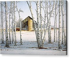 A Cluster Of Birch Acrylic Print by Conrad Mieschke