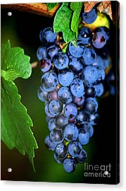 A Cluster Of Cab Acrylic Print by Laurel Sherman