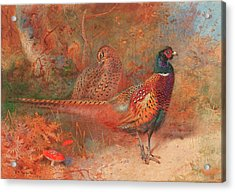 A Cock And Hen Pheasant Unframed Acrylic Print