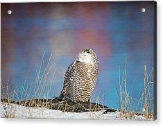 A Colorful Snowy Owl Acrylic Print