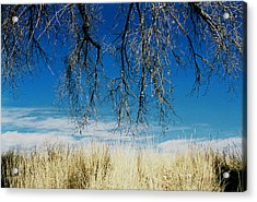 A Comfortable Place Acrylic Print