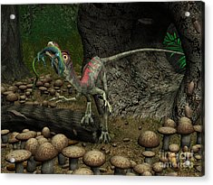 A Compsognathus Prepares To Swallow Acrylic Print by Walter Myers