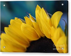 A Cool Sunflower Acrylic Print