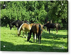 A Couple Of Horses Acrylic Print by Pit Hermann