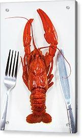 A Crawfish Acrylic Print by Masako Metz