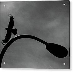 A Crow And A Streetlight Acrylic Print