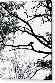 A Crow Shook Down On Me The Dust Of Snow Acrylic Print
