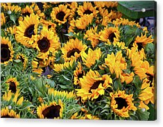 Acrylic Print featuring the photograph A Crowd Of Sunflowers by Susan Cole Kelly