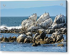 A Crowded Bird Rock Acrylic Print